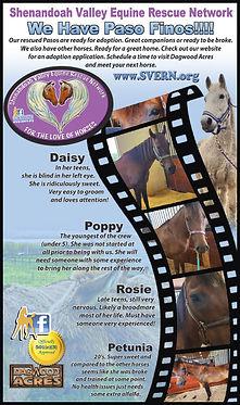 HorseTimesThirdPageAdAugust2020.jpg