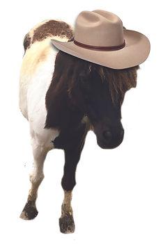 lil cowboy joe.jpg