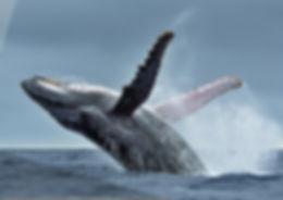 WhaleWatching(CULTURE)2.jpg