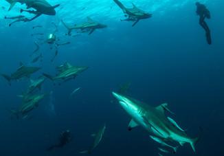 Baited Dives for more adventure.jpg