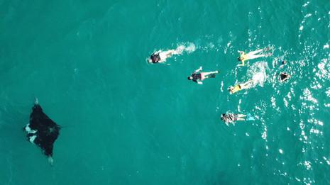 Snorkel with Mantas.jpg