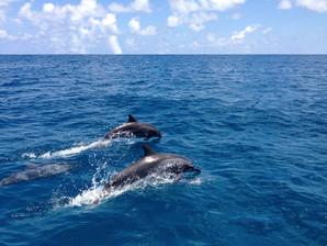 Dolphin encounters on surface.JPG