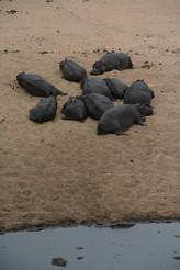 Hippos lying around.JPG