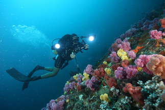 Dive the coral reefs with your camera.JP