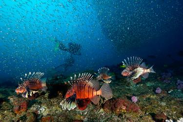 Dive the lionfish cave.JPG