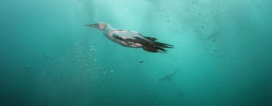 Sardine Run  (2).jpg