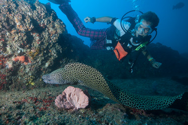 Moray Eels everywhere you look