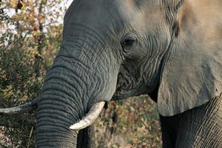 Come across fascinating Elephants.jpg