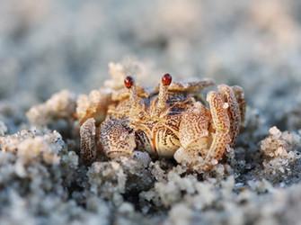 Beach walks with little visitors.jpg