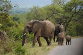 a beautiful elephant family