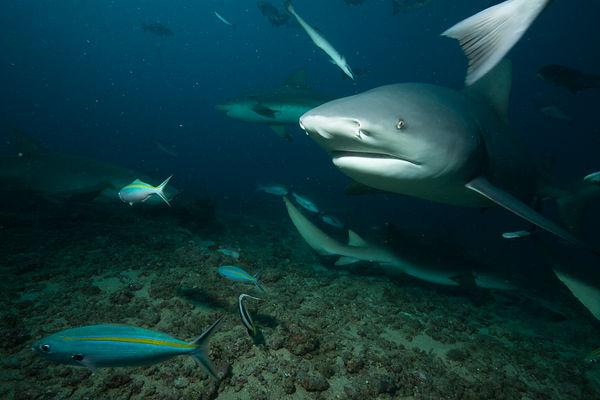 Shark encounters.jpg