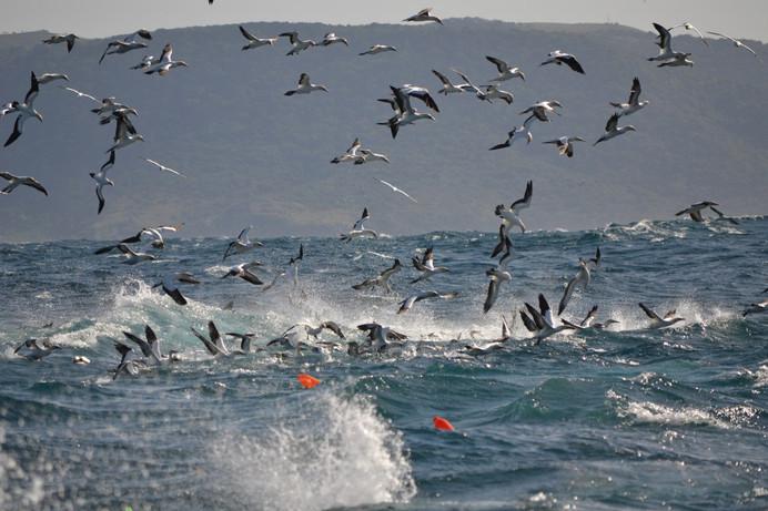 Sardine Run  (13).jpg