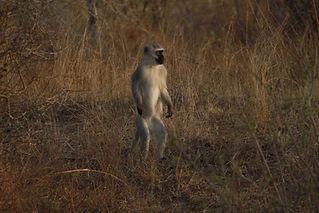 about safaris .JPG
