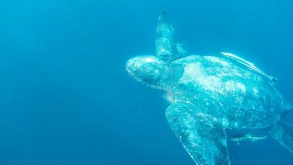 Snorkel with Turtles.JPG