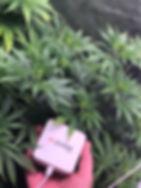 grow_room_sensor.jpg