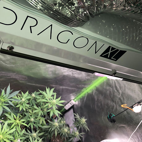 commercial-grow-light-scynce-dragon-xl-600.jpg