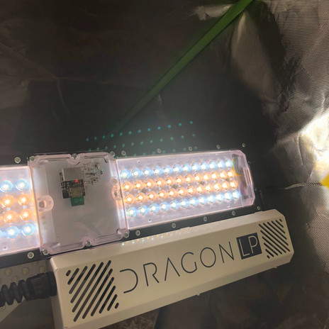 dragon-lp-250-grow-light.jpg