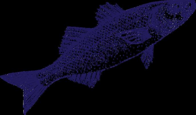 fish—jump_edited.png