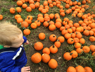 Fall Activities in and around Guelph