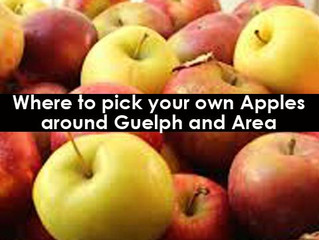 Top Apple Picking near Guelph