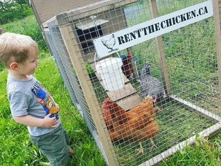 Top 10 Reasons to Rent Chickens