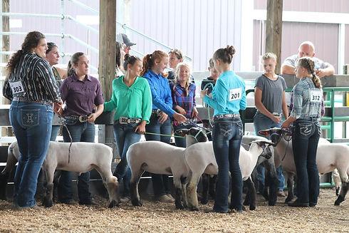 sheep six.jpg
