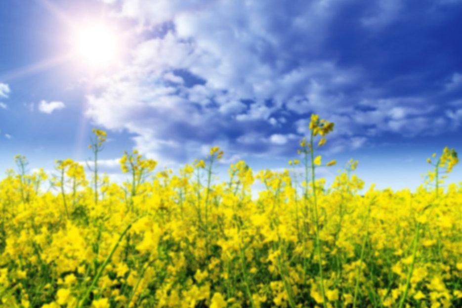 210603_Flowers BG copy.jpg