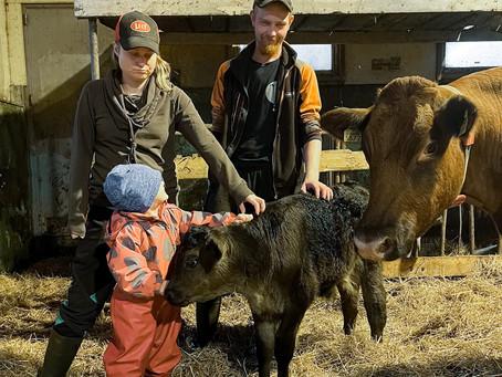 Mustolan maitotilan uusilla omistajilla on ollut työntäyteisiä kuukausia