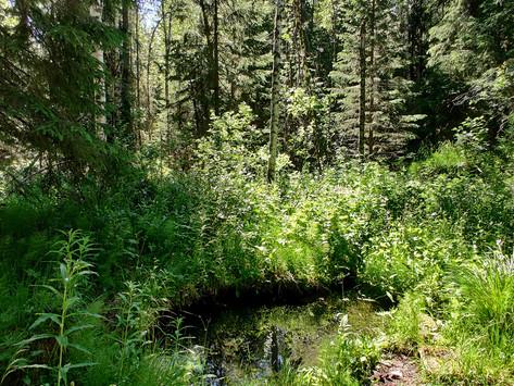 Väyrylään on perustettu Kaivoniityn luonnonsuojelualue