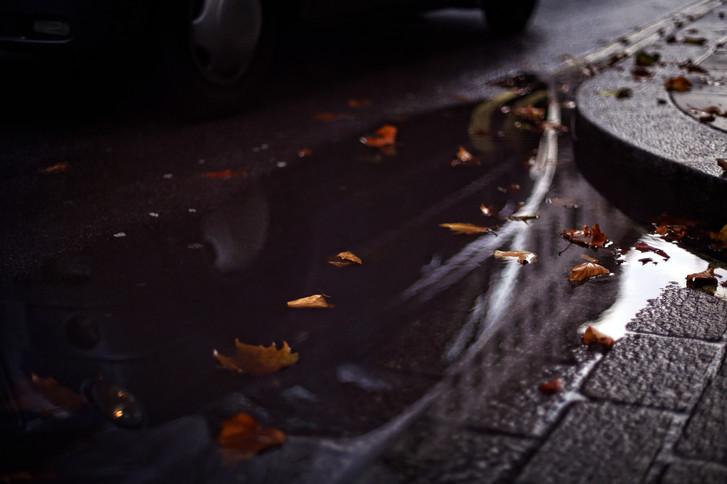 london leaves .jpg