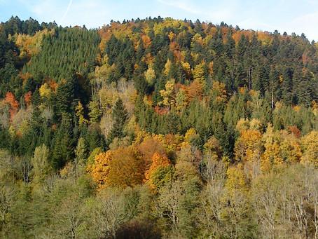 Le SHINRIN YOKU ou l'Art du Bain de Forêt