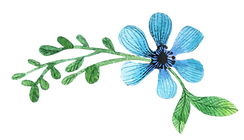 flores-08.png