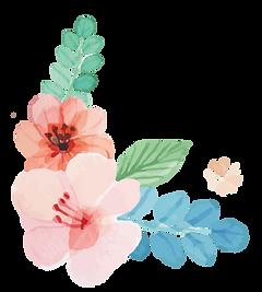 flores-04.png
