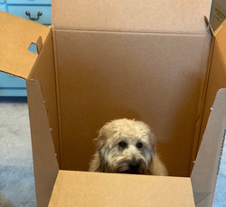 Packing the...dog!