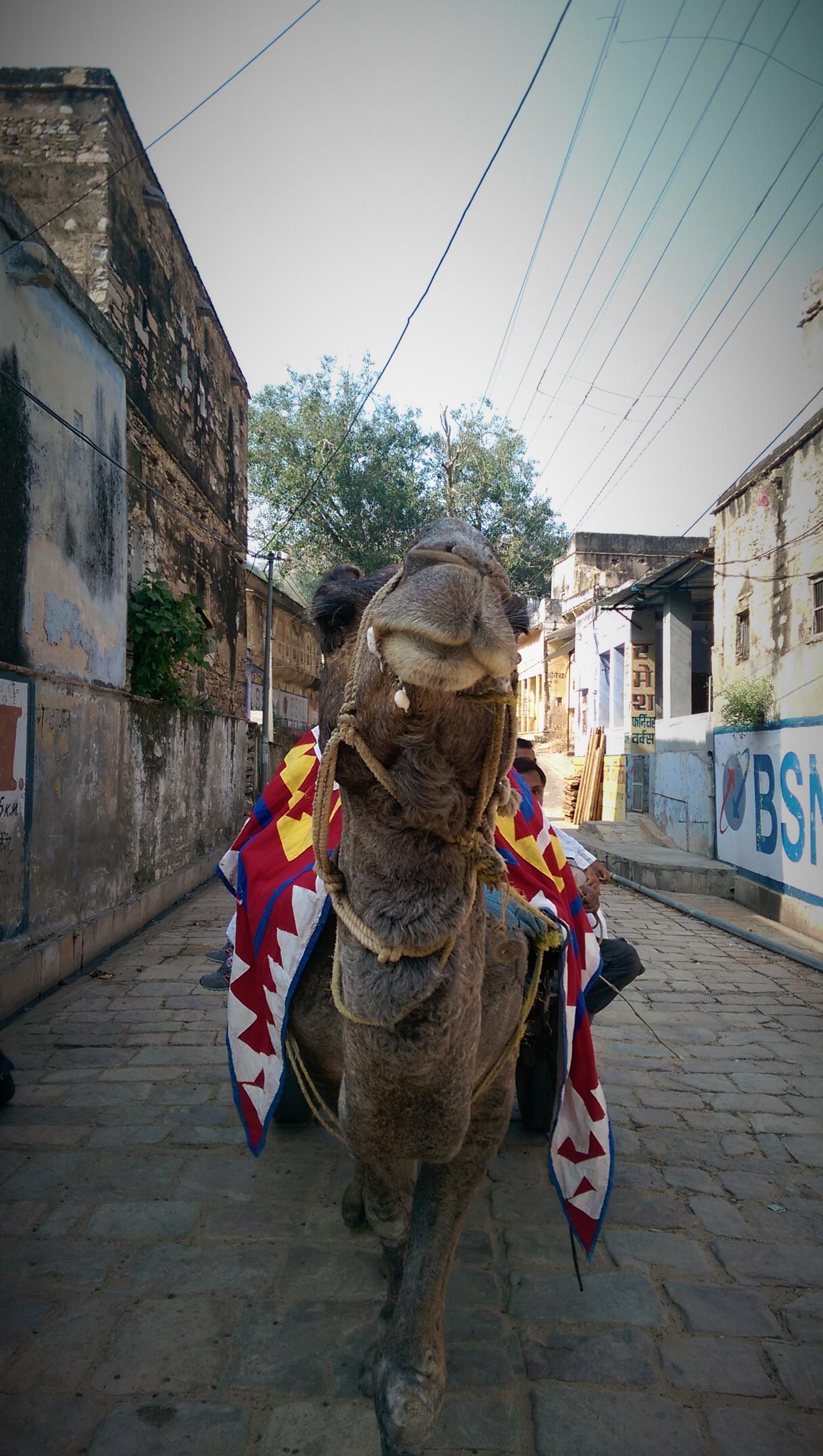 Indie 2015