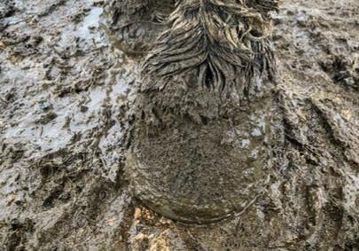 Muddy Legs & Dreadlock Tails... 6 ways to help your horse endure the mud season!