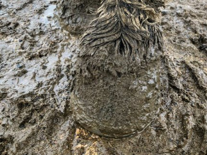 Muddy Legs & Dreadlock Tails... 6 ways to help your horse endure the mud season!