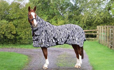 Horse wearing a zebra print fly rug.