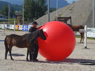 SFRV HorseChallenge Richter- und Parcoursbauer-Grundkurs