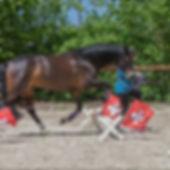 Association Suisse d'équitation de Loisir ASEL