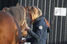 Pferde-Nothilfekurs 06.jpg