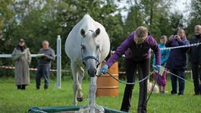 Letzte Möglichkeit zur Qualifikation für die Schweizermeisterschaft SFRV HorseChallenge®