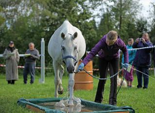 Absage SFRV HorseChallenge® Düdingen und Niederrohrdorf