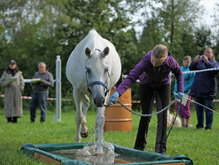 SFRV HorseChallenge Wettkampf-Grundkurs 21./22.4.2018