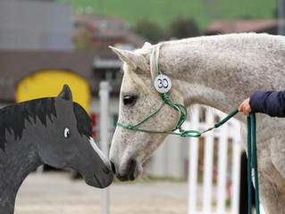 SFRV HorseChallenge® Richter- & Parcoursbauer-Grundkurs 2020
