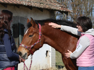 Lehrgang Energetischer Pferdetherapeut SFRV