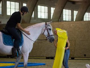 Formation initiale Equitation de loisir ASEL - Première édition en Suisse romande