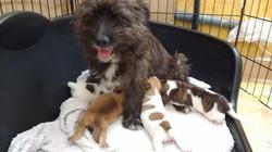 maya with puppies feeding