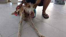Súper at the vet