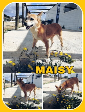 Maisey-collage.png